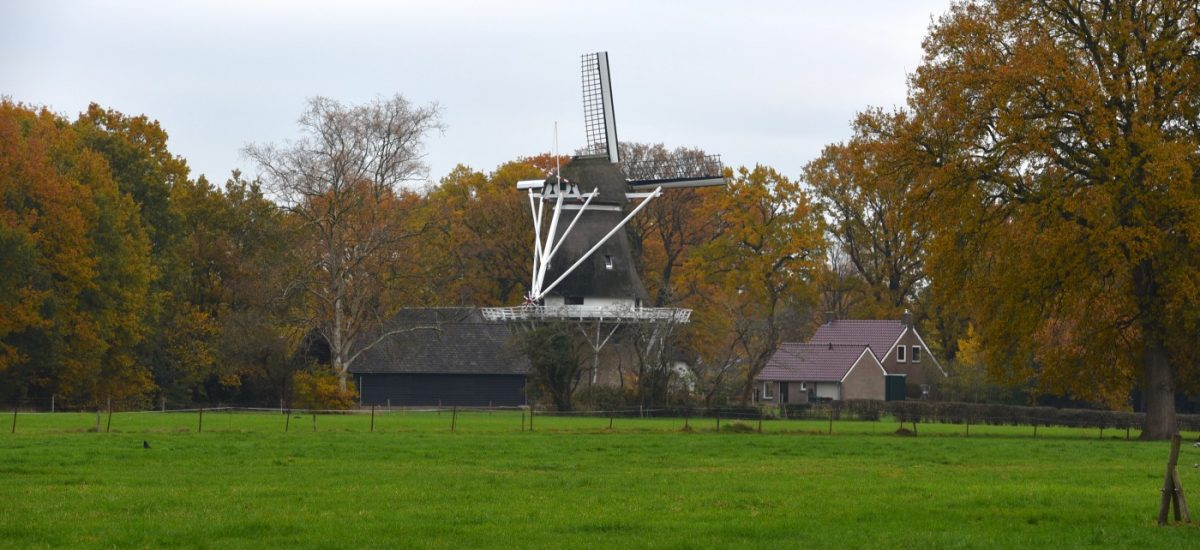 Molen van Havelte in herfst